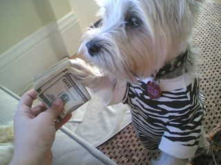 Maddy's new money